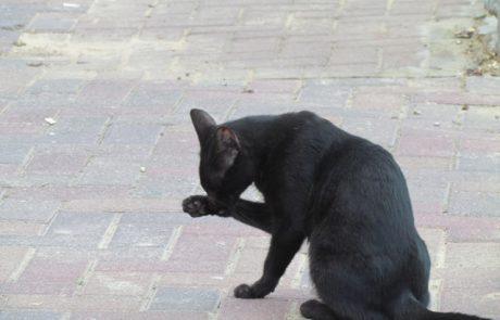 הסוף לחתוליית הרחוב הלודאית
