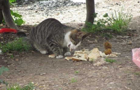 מהיום גם אוכל לחתולים רוכשים אונליין, וחוסכים