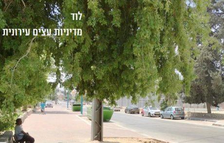 עיריית לוד בתוכנית עירונית : תוספת של 20,000 עצים בעיר.