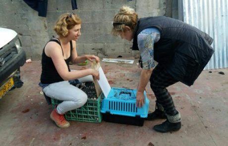 מבצע עיקור וסירוס של 1200 חתולי רחוב בלוד