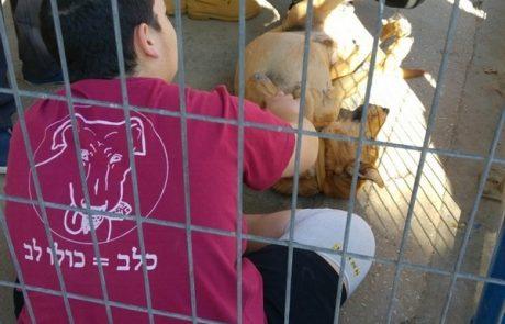 שנת החינוך לאהבת בעלי חיים בלוד