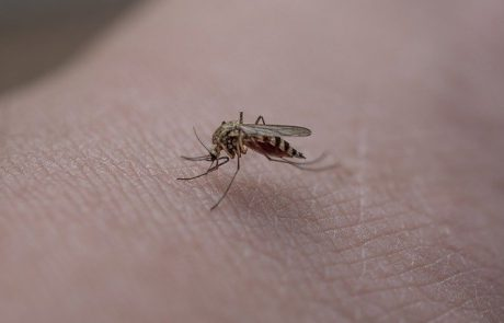 איך מתמודדים מול יתושים?