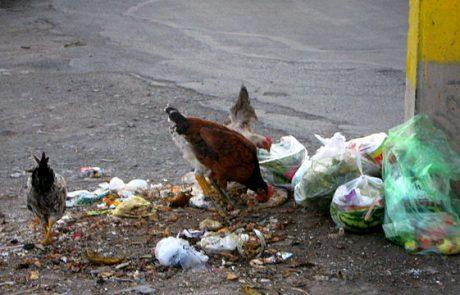 """מנקים את העיר: תועדה ע""""י פקח סמוי משליכה אשפה במקום ציבורי – ונקנסה"""