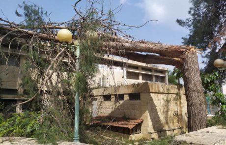 הכן עירך לחורף: חברת החשמל ועיריית לוד יצאו למבצע גיזום עצים ברחבי העיר