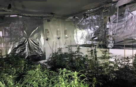 רמלה: משטרת ישראל חשפה מעבדה לגידול סמים, שישה חשודים נעצרו