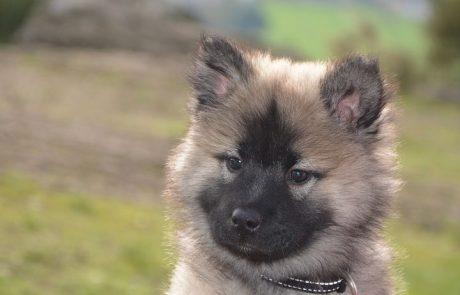 עבריינים נגד כלבים: למה הוצתו משרד הכלבייה בלוד?